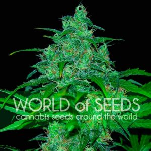 World of Seeds Wild Thailand