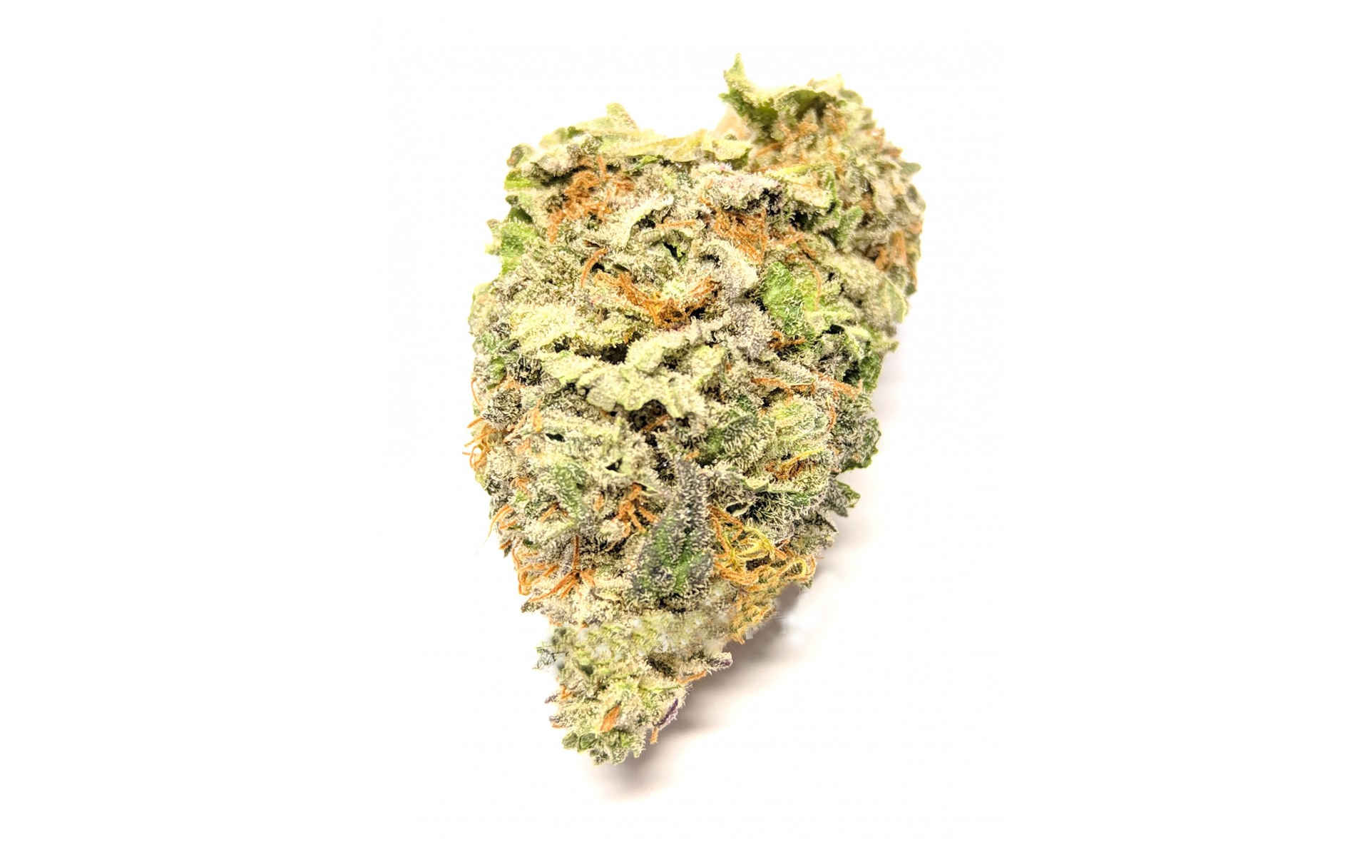 Cheese Dinafem najlepsza odmiana marihuany