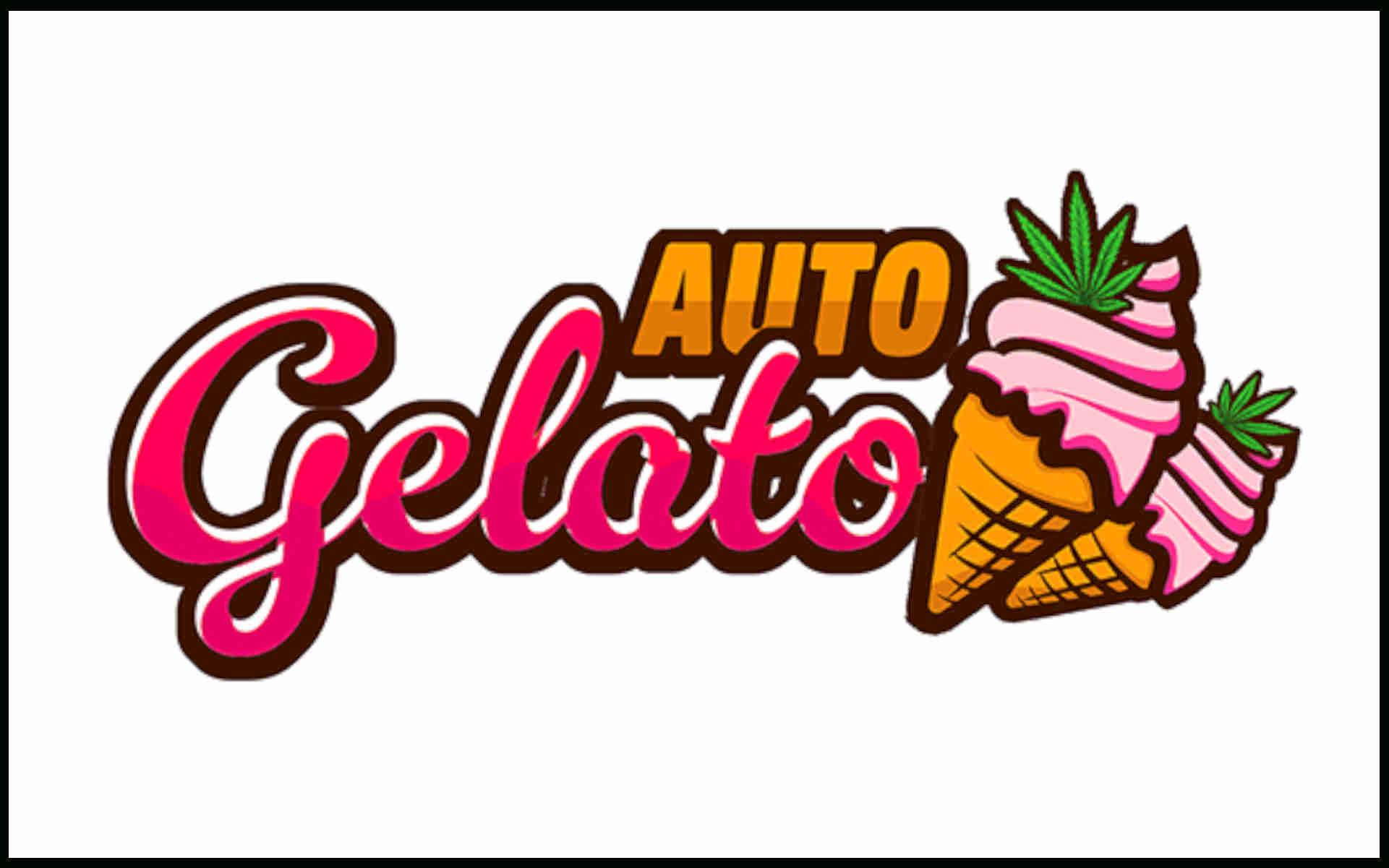 Gelato Auto Fast Buds nasiona marihuany
