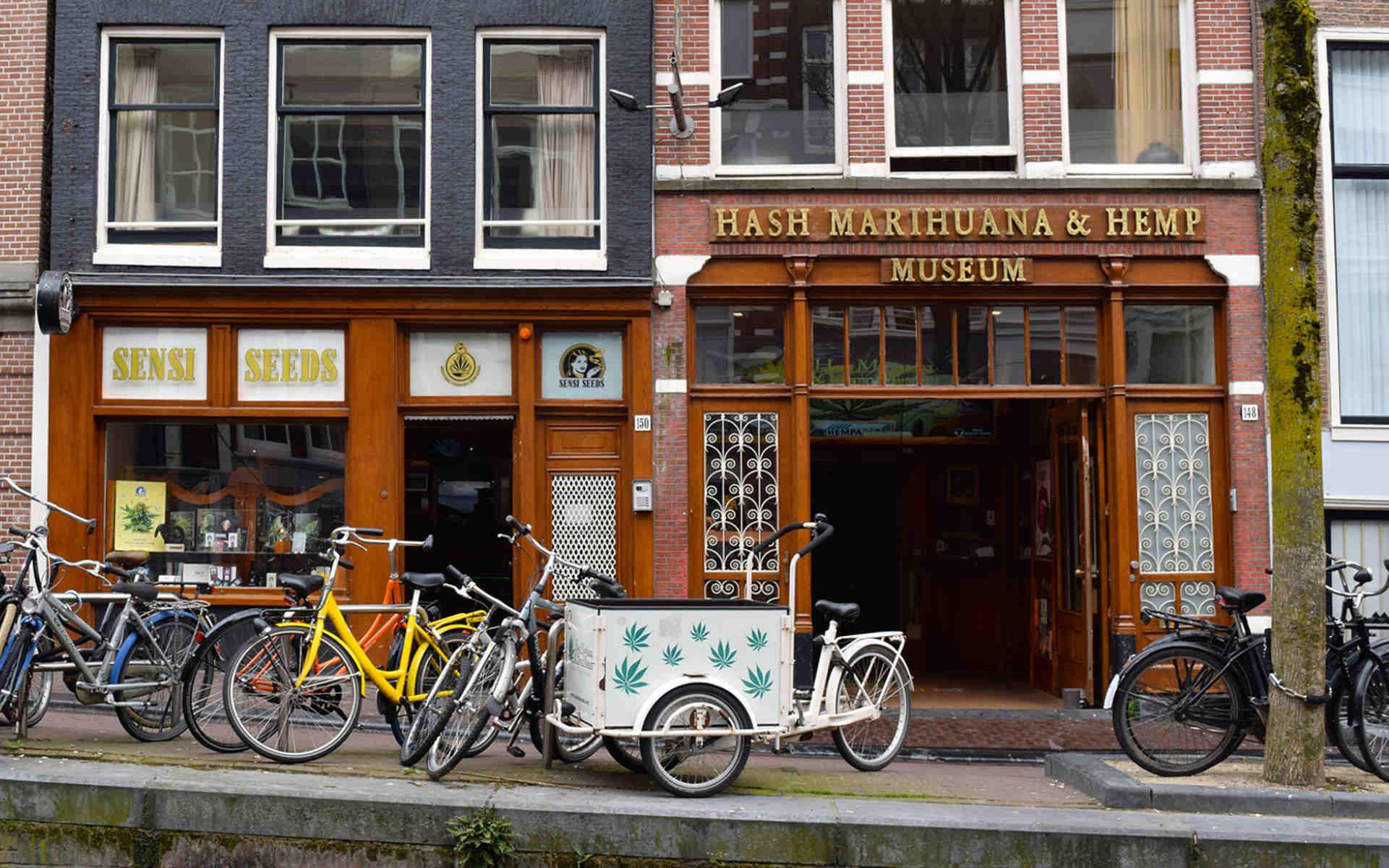Muzeum Haszyszu i Marihuany w Amsterdamie - dziś