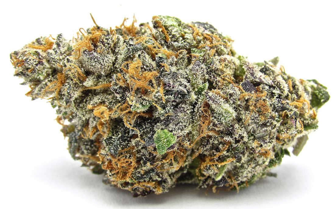 Gelato odmiana marihuany