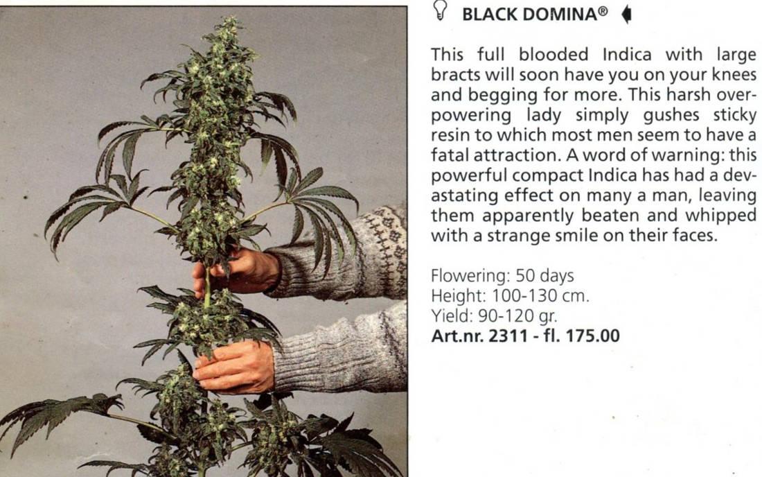 Nasiona Black Domina sklep pewny