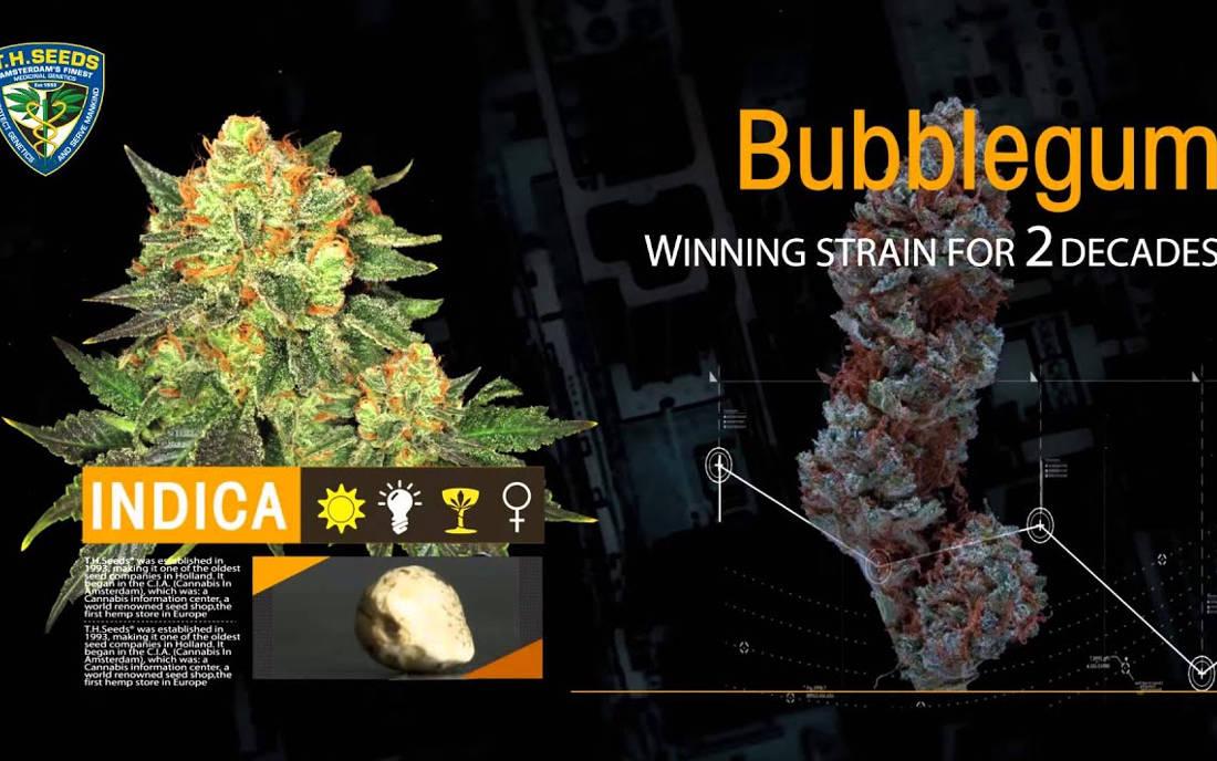 TH Seeds nasiona marihuany