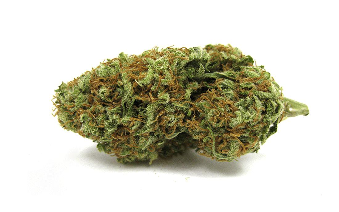 Nasiona marihuany AK47 sklep