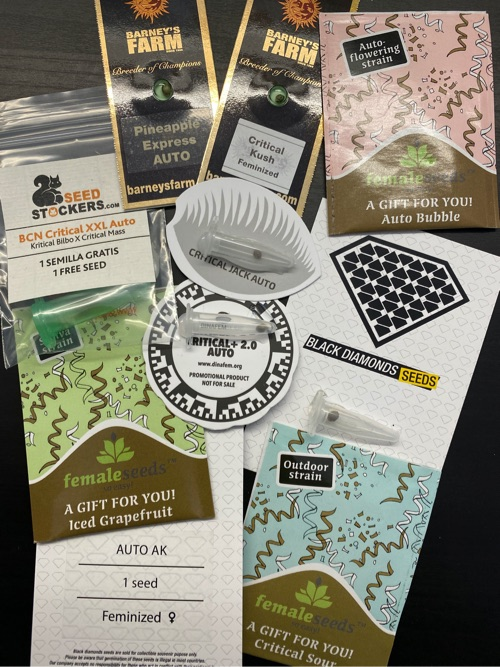 Outdoor 2020 promocja na nasiona marihuany