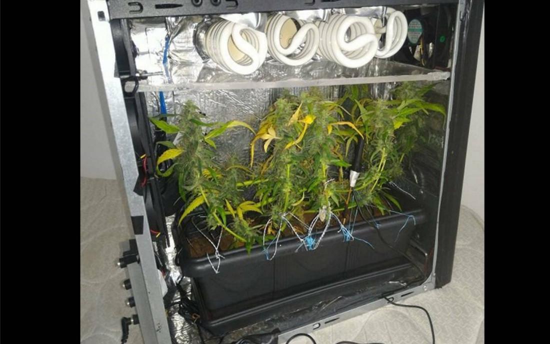 PC Growbox do uprawy konopi