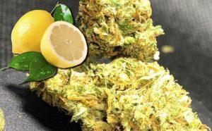 Super Lemon Haze – cytrynowy zwycięzca