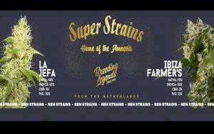 """La Jefa"" i ""Ibiza Farmer's"" – nowości od Super Strains na 2020"