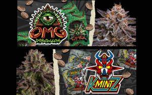 OMG i KmintZ – nowe odmiany od Ripper Seeds