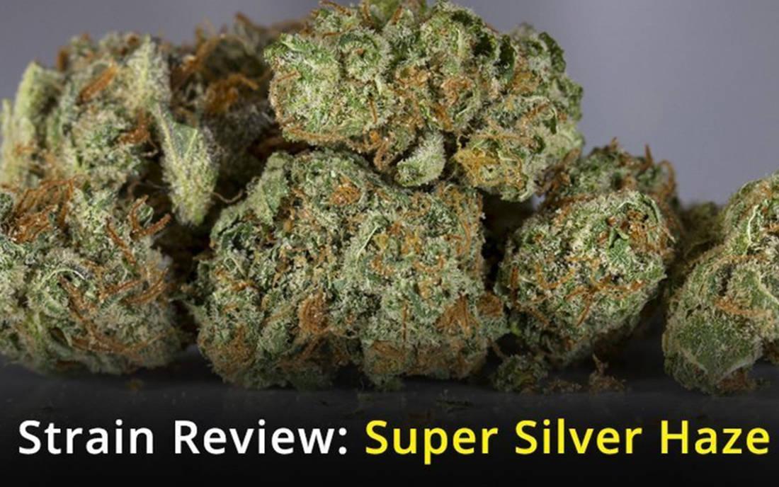 Super Silver Haze nasiona konopi