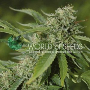 World of Seeds Brazil Amazonia