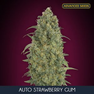Advanced Seeds Auto Strawberry Gum