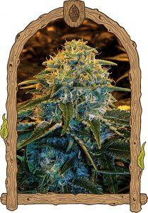 Exotic Seed Z&Z
