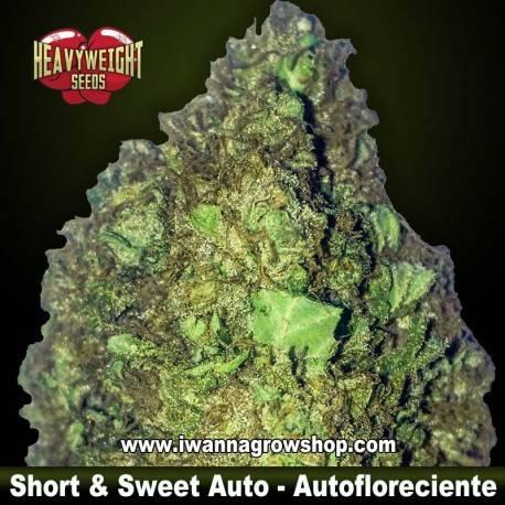 Heavyweight Seeds Short&Sweet Auto