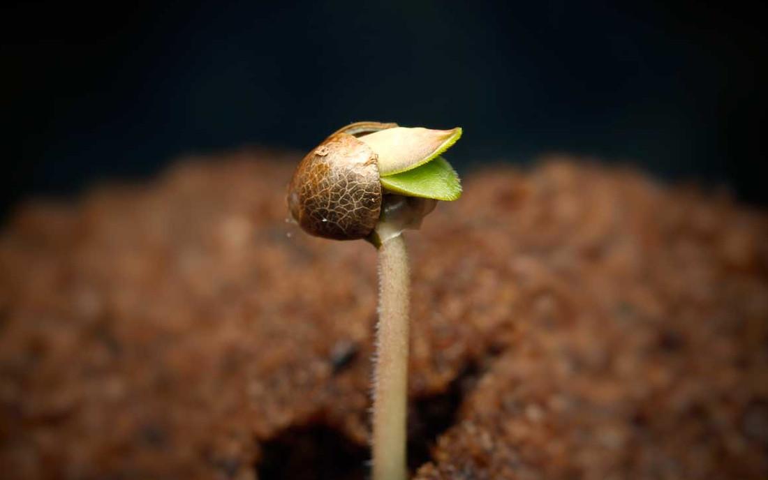 Krzyżowanie różnych odmian roślin
