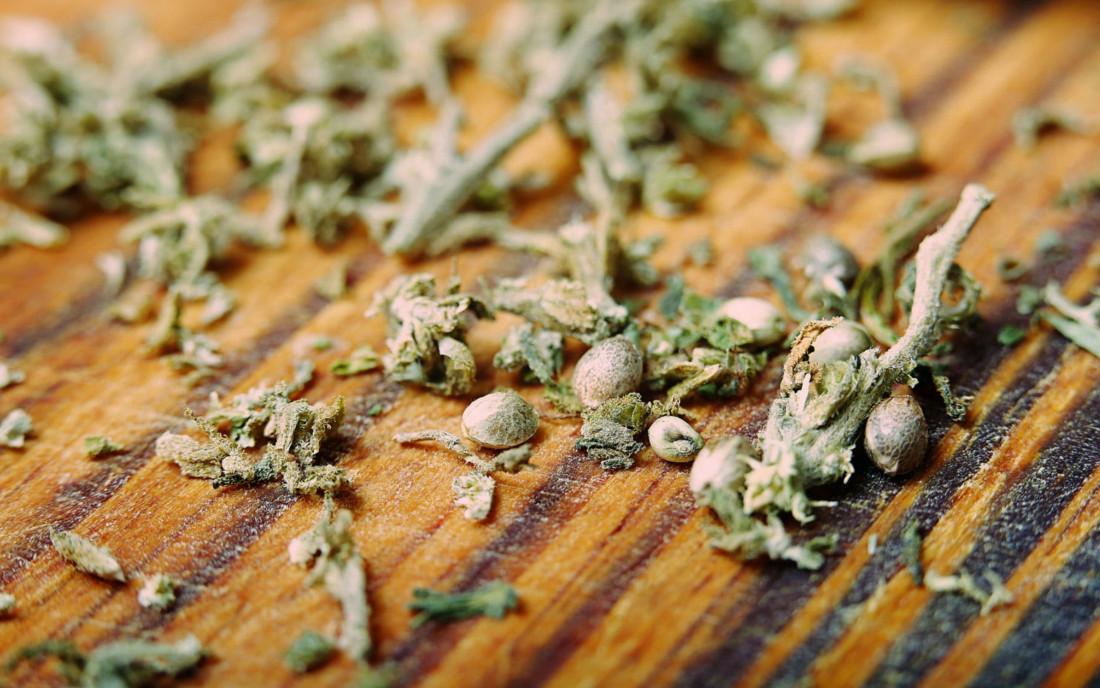 Rozmiar, kolor i kształt nasion konopi – kryteria jakości
