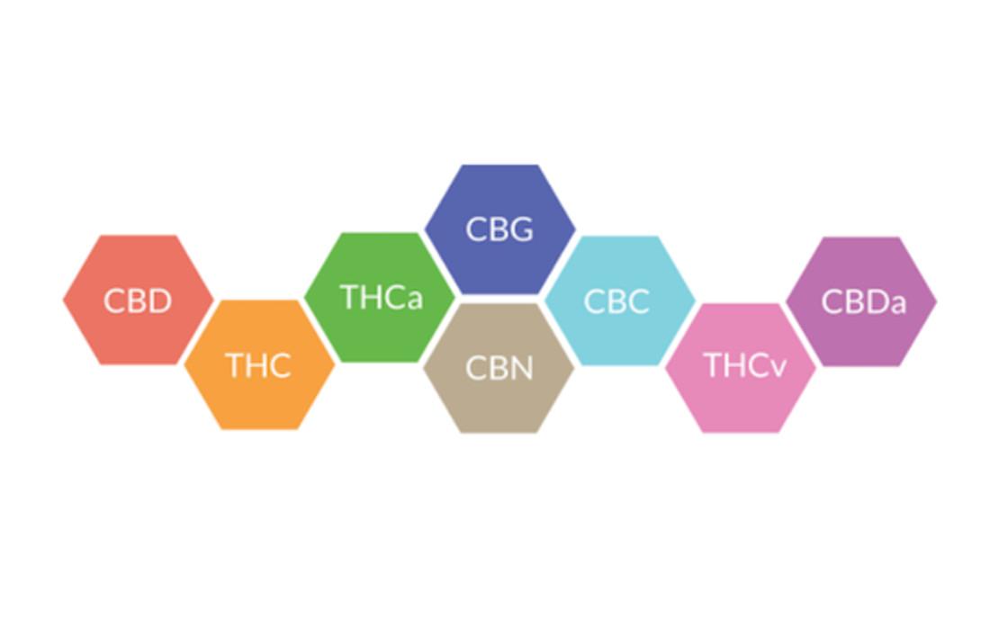 Wpływ kannabinoidów i terpenów na działanie konopi