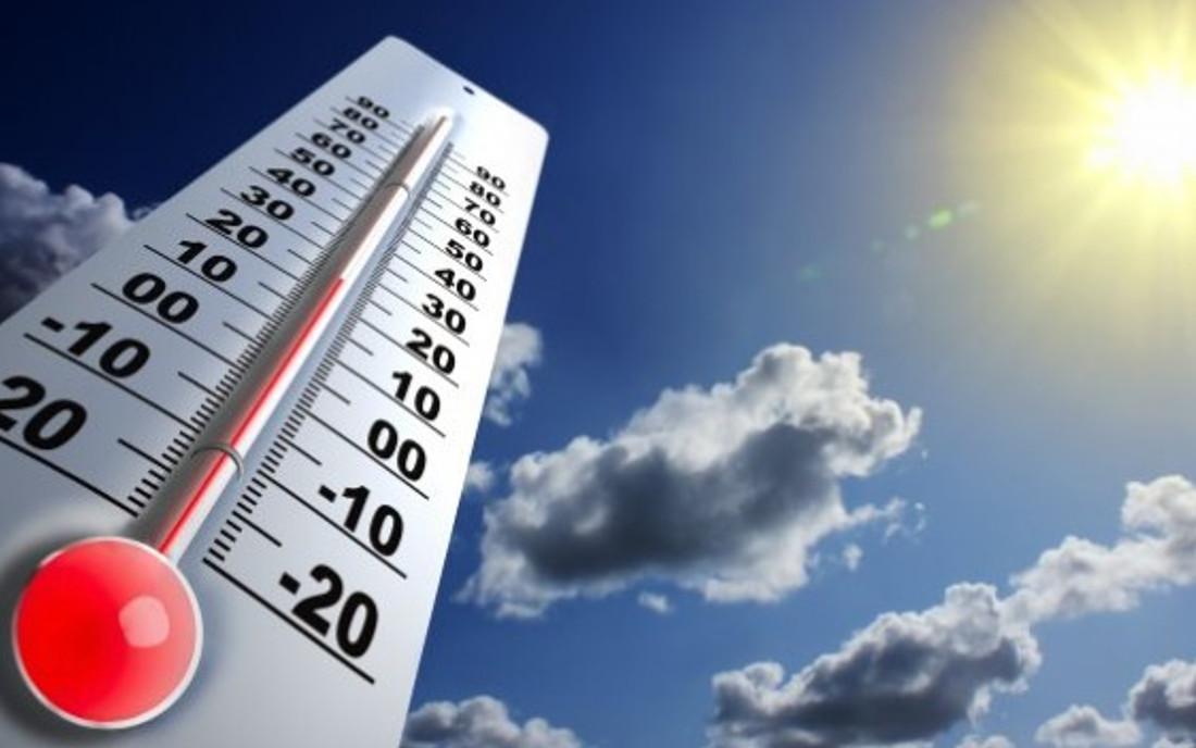 Temperatura przechowywania nasion marihuany